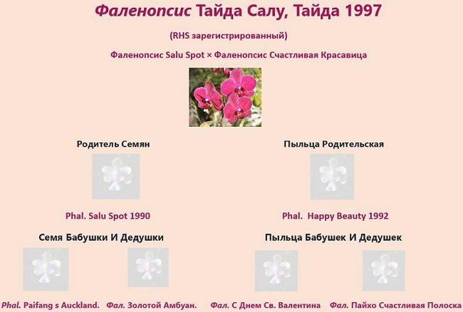 Родословная орхидеи Кимоно