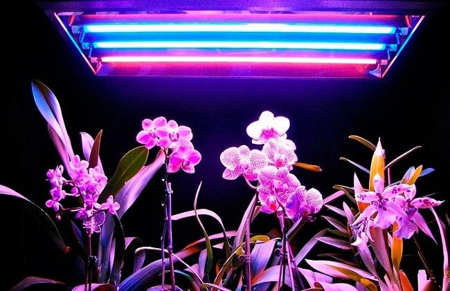 Досвечивание орхидей в зимний период