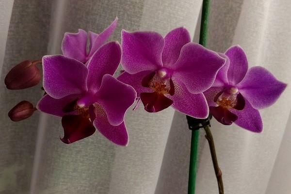 Домашнее цветение