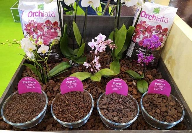 Орхиата для орхидей