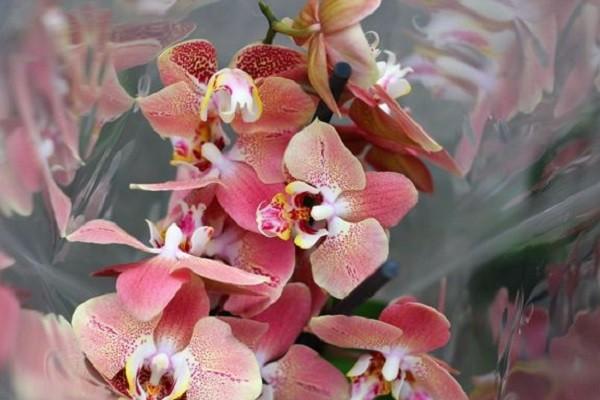 Орхидея в магазине