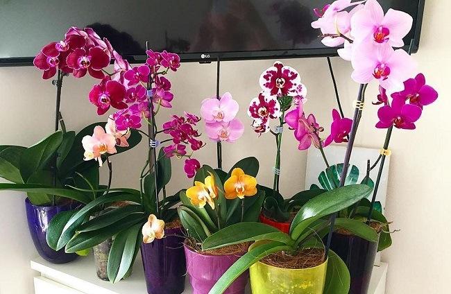 Красивая коллекция орхидей